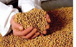 Gevaar van GMO soja
